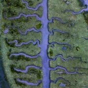 Low tide at blue hour reveals a muddy riverbed of fishbone shaped streams in the middle of a small, but unique part of the salt marsh located at the end of the Betanzos Estuary, near Coruna in northern Spain.